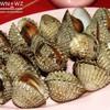 หอยแครงลวก ตัวไม่เล็กสดสะอาดเนื้อดี สุกไปหน่อย น้ำจิ้มรสจัดแต่อ่อนเปรี๊ยวไปนิด