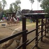 Alpaca Ratchaburi