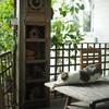 น้องแมวเล่นyoga ท่า child pose