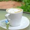 Hot Cappuccino 55.-