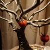 ผลมะเขือเทศยัดไส้บนต้นบอนไซ