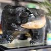 หมีควายคาบปลาทู !!