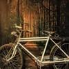 มุมถ่ายรูปสุดเก๋ กับภาพธรรมชาติ 3D จากศิลปินชื่อดัง จักรยานขอบอกนานกว่า 30 ปี