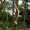 งูตัวย้าวยาว