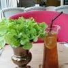 Iced Iemon tea 75 ฿