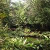 ป่าและน้ำ
