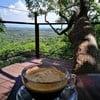 รูปร้าน Tree Bridge Coffee