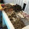 หอยหมึกปูแมงดา