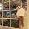 บรรยากาศ Caturday cat cafe
