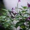 อุทยานผีเสื้อและแมลงกรุงเทพ