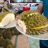 Durian Buffet Pattaya