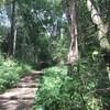 น้ำตกทีลอซู เขตรักษาพันธุ์สัตว์ป่าอุ้มผาง