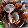 หอยแครงลวกสดๆเนื้อเด้งๆ