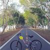ปั่นจักรยานท่ามกลางธรรมชาติ
