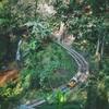 Pongyang Zipline & Jungle Coaster
