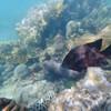 ปะการังใต้น้ำจะประมาณนี้ค่าา