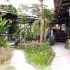 สวนผัก โอ้กะจู๋ ออร์แกนิค CM East