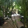บรรยากาศ Little Tree Garden