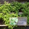 Organic Way City Farm