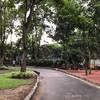 สวนป่าเฉลิมพระเกียรติ
