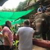 หมู่บ้านช้างและลิงดำเนินสะดวก