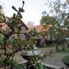 รูปร้าน บ้านบองปะโอน