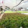 สวนผึ้งไฮโดรฟาร์ม ฟาร์มผักไฮโดรโปนิกส์