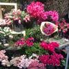 Aoyama Flower Market TEA HOUSE  Omote-Sando