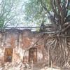 โบสถ์โพธิ์โอบ โอบไม้ 4 ต้นทั้ง 4 มุม