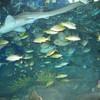 รูปร้าน Underwater World