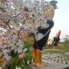 สวนเฉลิมพระเกียรติพระบาทสมเด็จพระเจ้าอยู่หัว 80 พรรษา