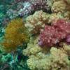 ปะการังสวยๆค่ะ