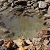 บ่อเล็กๆที่นำก้อนหินมาล้อมเป็นวงไว้