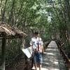 ทางเดินชมป่าชายเลน