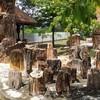 พิพิธภัณฑ์ไม้กลายเป็นหิน และทรัพยากรธรณี ภาคตะวันออกเฉียงเหนือ