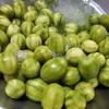มะกอก • จิ้มกะปิหวานอร่อยดี ที่ ร้านอาหาร กะปิหวานชนาธิป