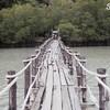 สะพานไม้กับความเขียวขจี