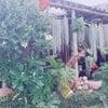 รูปร้าน ผัดไทยเตาถ่าน อ.ภูเขียว จ.ชัยภูมิ