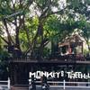 รูปร้าน Monkey's Treehouse