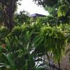 Leaf Garden แก่งคอย สระบุรี