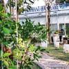 Elephant House Lake view Cafe