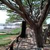 ต้นไม้ใหญ่อาศัยเงาบังแดดช่วงสาย