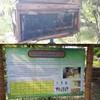 การเลี้ยงผึ้งไพร