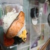 ไข่หวานบ้านซูซิ  สาขาเทเวศน์