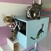 Cat A Rest Hotel