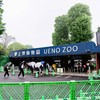 สวนสัตว์อุเอโนะ ภายในสวนสาธารณะอุเอโนะ