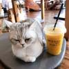 CAT 'n' A CUP