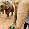 All Elephant Home Phuket