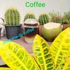 น้ำมะพร้าวน้ำหอม ท็อปด้วย เอสเปรสโซ่เข้มๆๆ หอมหวานจากธรรมชาติ คอกาแฟห้ามพลาดนะจ้