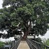 Tree Cups Phang Nga Coffee